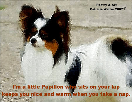 Papillon - I'm a little Papillon who sits on your lap, keeps you nice and warm when you take a nap.