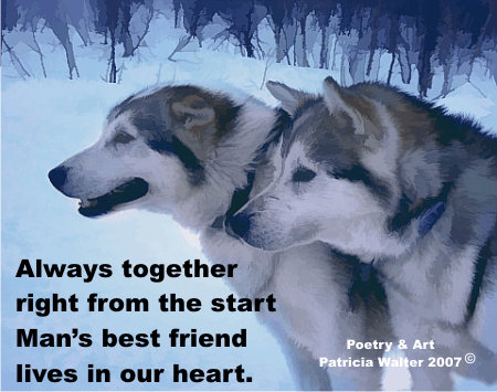 Huskies - Always together right from the start, Man's best friend, lives in our heart.