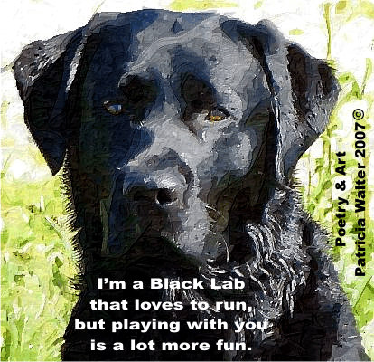 I'm a Black Lab that loves to run, but playing with your is a lot more fun.