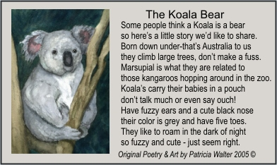 The Koala Bear - original Poetry by Patricia Walter